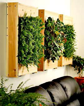 plantas-para-decorar-paredes